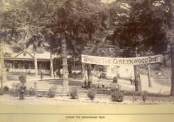 Pt Reyes  The Greenwood Tree camp