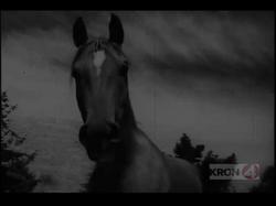 Trail Ride video pic