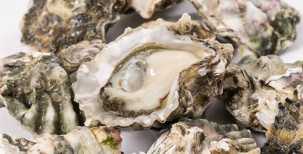 Kumamoto Oysters 1 Dz. West Coast, CA
