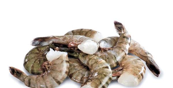 Gulf Shrimp, 1 Lb. Headless, Shell on.