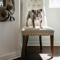in-home pet photography