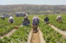 field workers.jpg