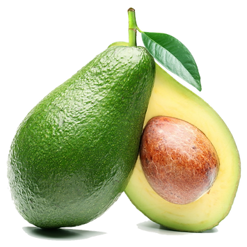 palm-tree-clipart-avocado-tree-9.png