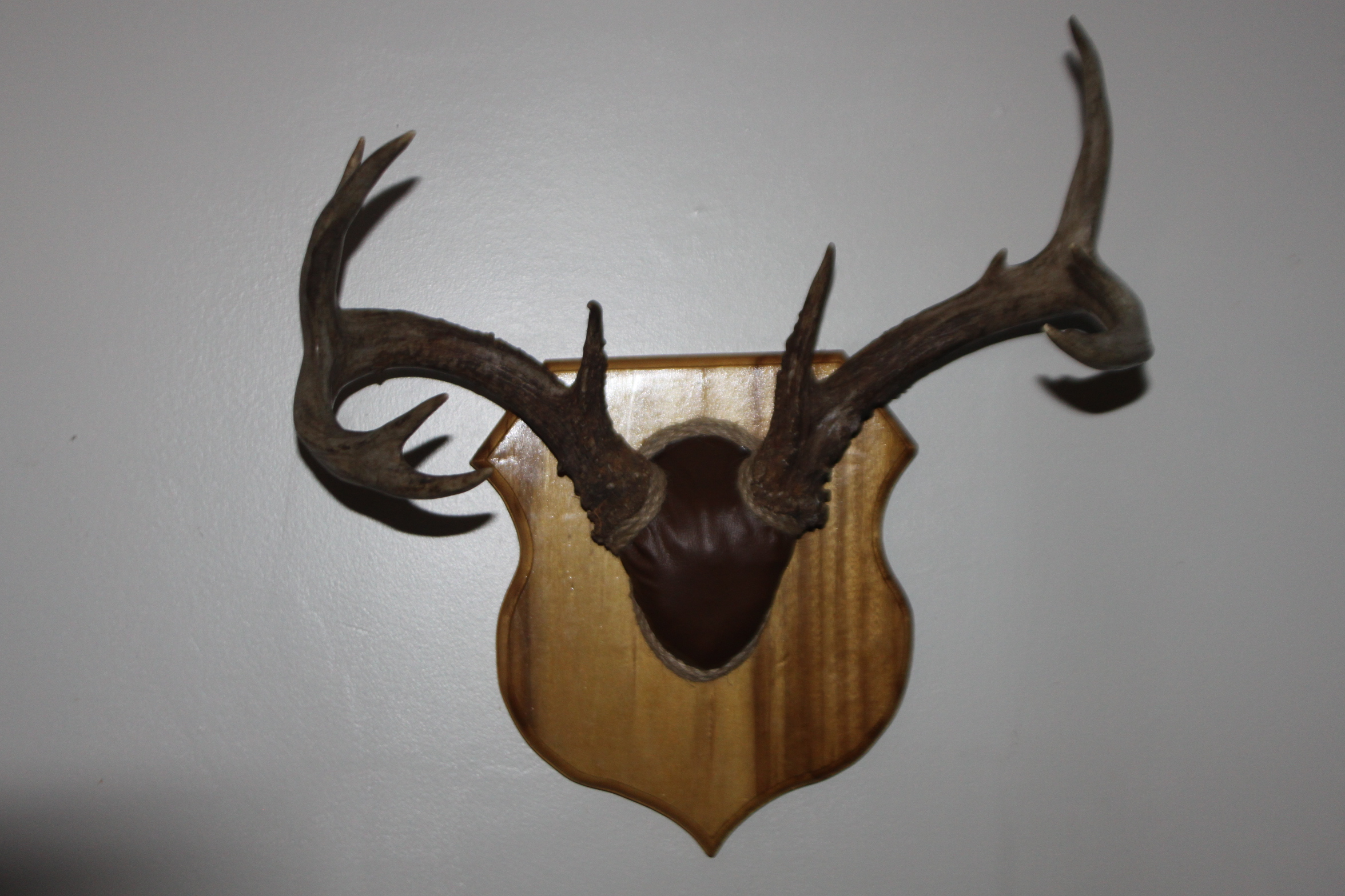 Another way to mount your trophies!