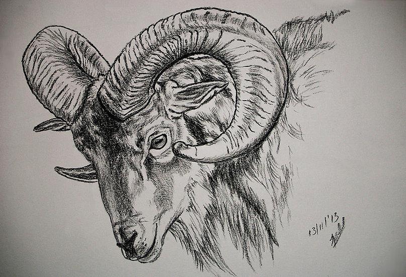Pronghorn, Goat, Sheep