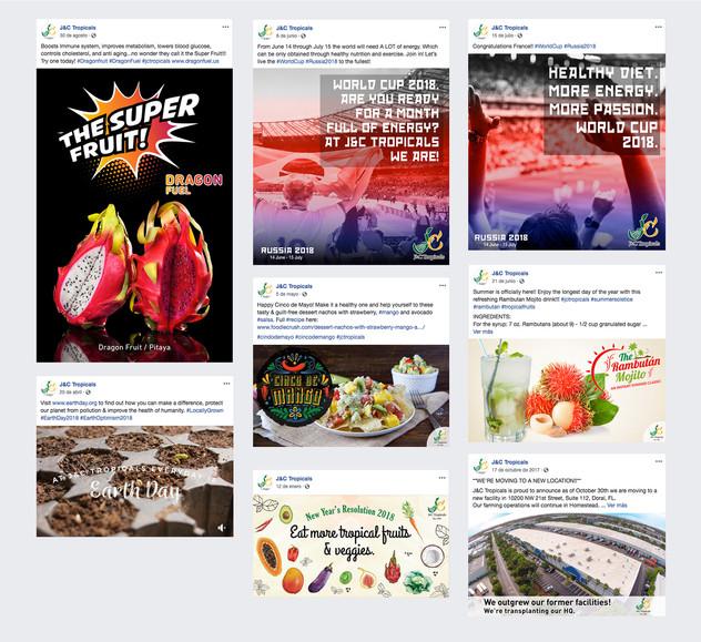 Facebook Posts Orgánicos