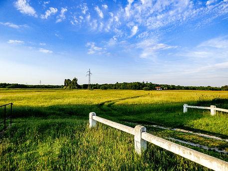 field-2355262_1920.jpg