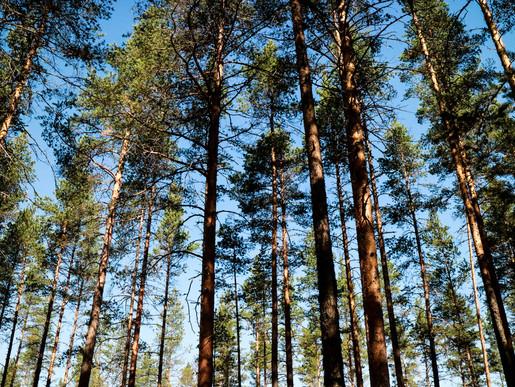 Sandqvist-Voxnan44.jpg