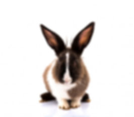 cute-rabbit-on-white-background_1232-462