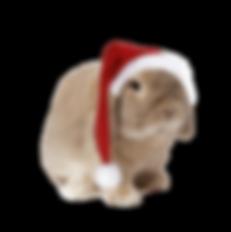 Edmonton Rabbit Boarding