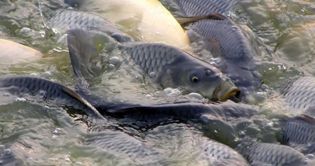 pisciculture.jpg