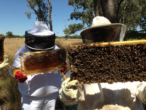 honey-combs.jpg