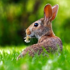 Célébrer Pâques en toute simplicité