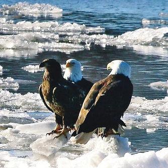 Floating Eagles.jpg