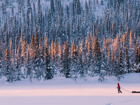 Your Next Adventure: Which OAC Ski is Best for You