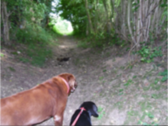 Dog walking near Warlingham, dog walking near selsdon