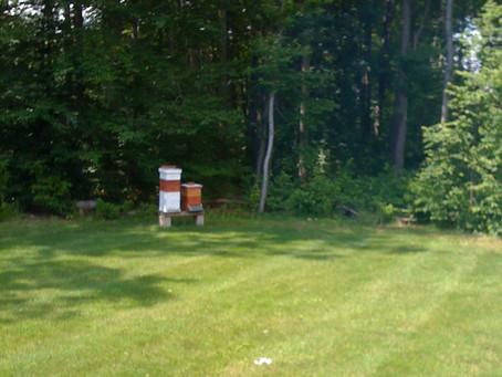 Be a Backyard Beekeeper!