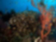 gili meno divers scubadiving