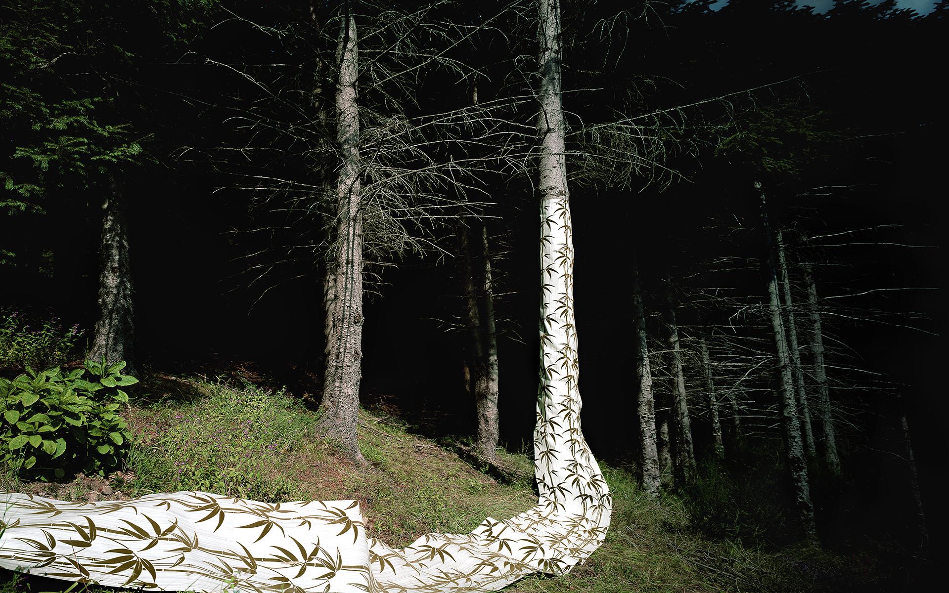 Natasja Verschoor Wallpaper Tree