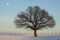 Winterweite