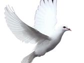 14332-doves-720x540_clipped_rev_1.png