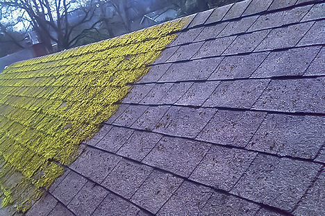 Green Valley Pest Control Roof Moss Treatments
