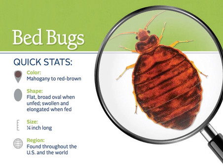 Eco-Friendly Green Valley Pest Control