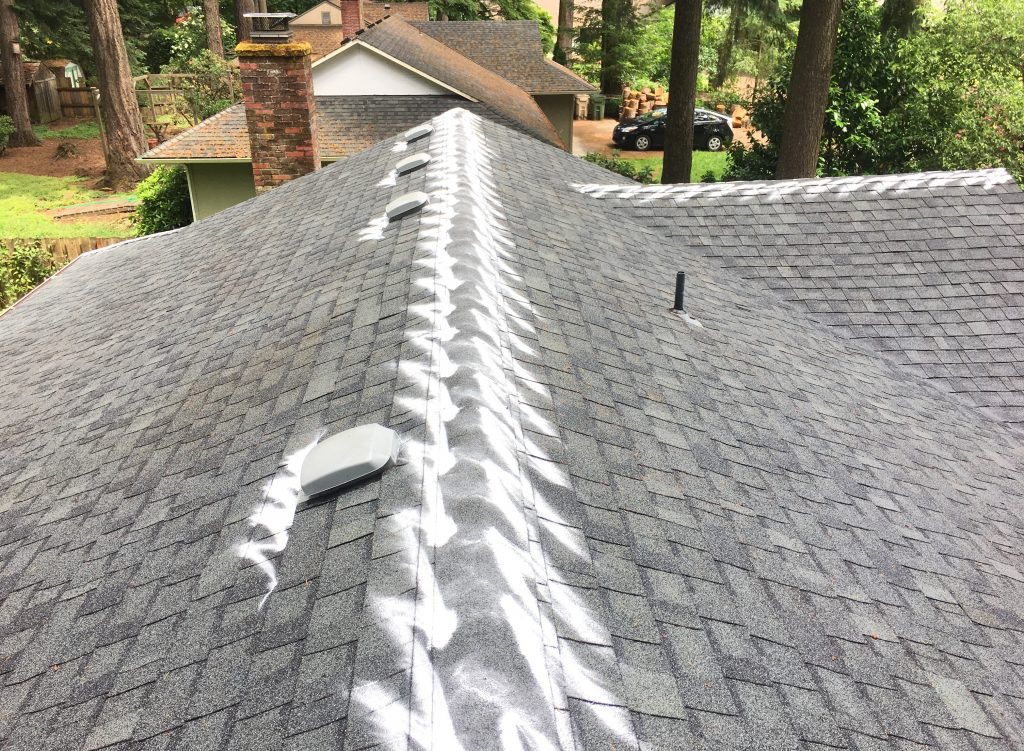 Roof Moss Treatments - After