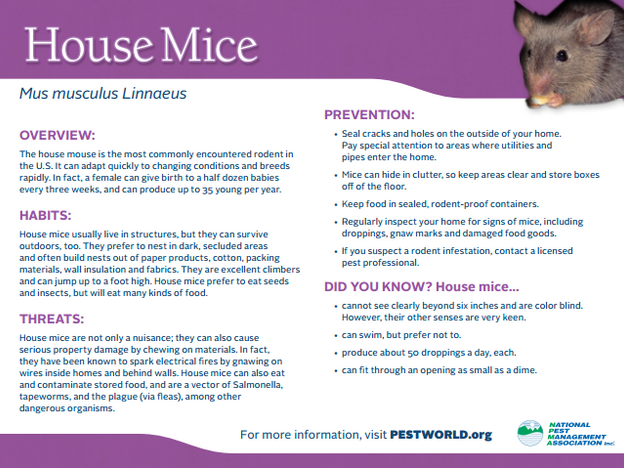 house_mice_card_2.png