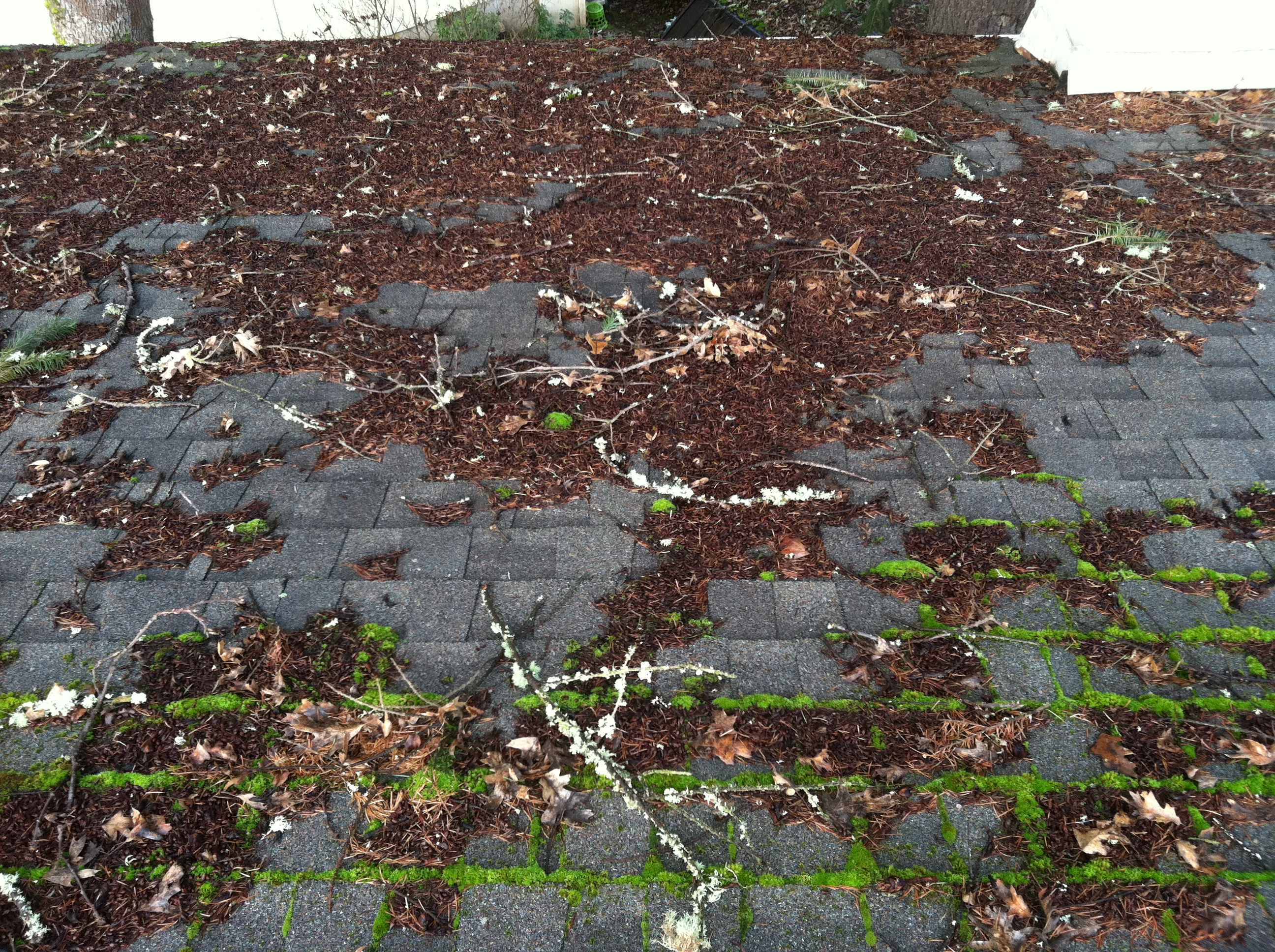 Rain Gutter Cleaning - Before