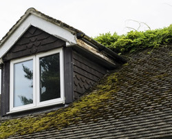 Roof Moss Treatments - Before