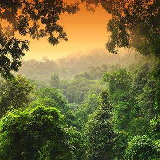Vietnam - Phong Nha NP