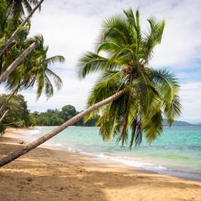 Nejlepší pití na cestách - kokos