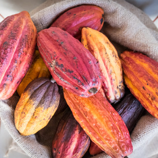 Kostarika kakao