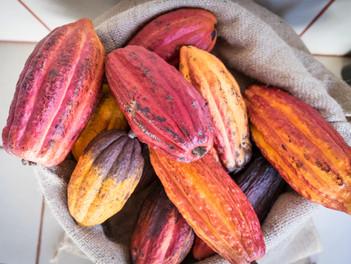 Po stopách kakaa na Kostarice