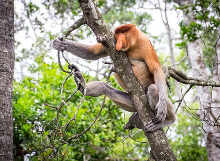 Borneo - po řece do pralesa
