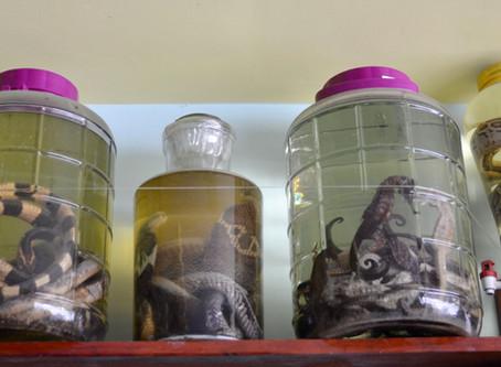"""Hadí víno - hadi, ještěrky a ptáci naložení v alkoholu. Alkohol, kde chce """"panák"""" odvahu."""