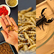 Hmyzí kuchyně