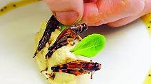 Hmyz na talíří