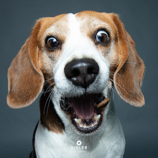 Paule-the-Beagle-44.jpg