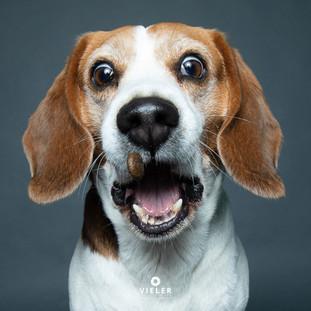 Paule-the-Beagle-40.jpg
