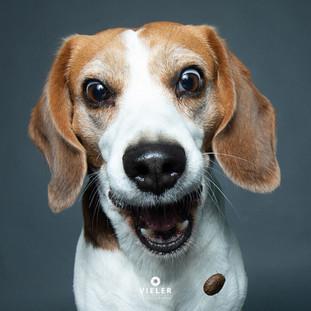 Paule-the-Beagle-30.jpg