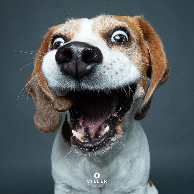 Paule-the-Beagle-22.jpg