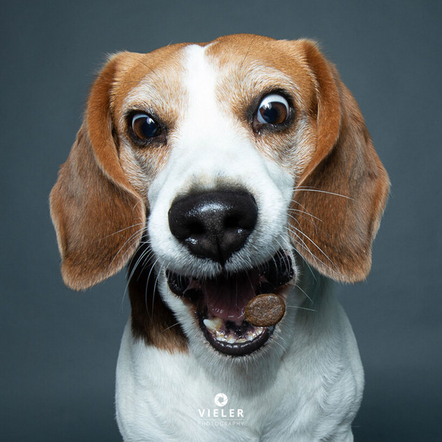 Paule-the-Beagle-20.jpg