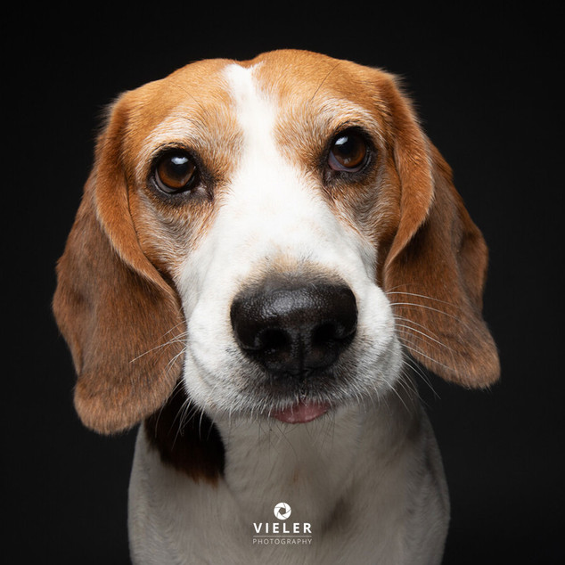 Paule-the-Beagle-63.jpg