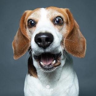 Paule-the-Beagle-05.jpg