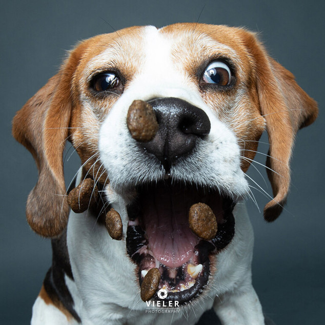 Paule-the-Beagle-45.jpg