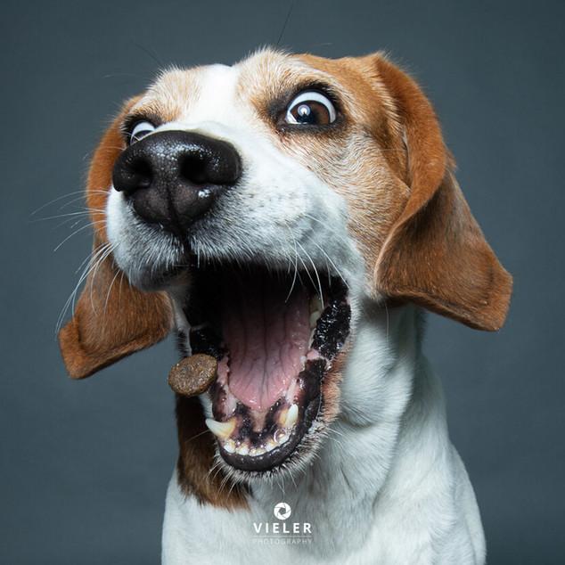 Paule-the-Beagle-18.jpg