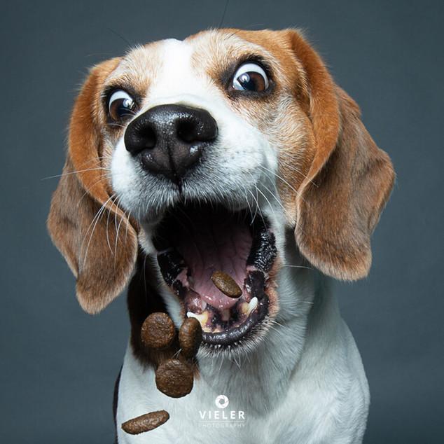 Paule-the-Beagle-46.jpg
