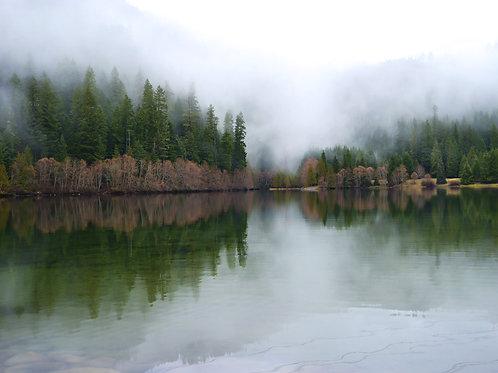 Morning Fog, Oregon